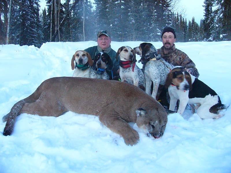 Big Dog Coyote